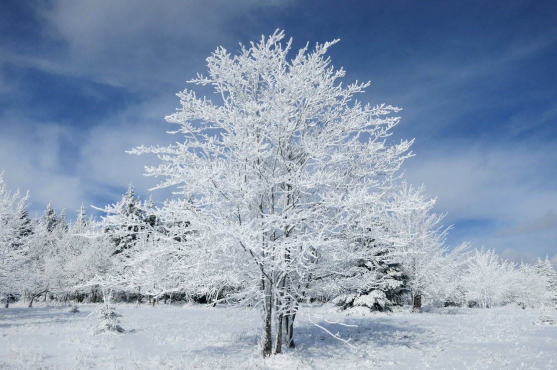 snow covered hoar frost