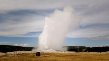 Old faithful with buffalo yellowstone national park by verglas media